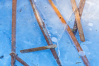Cattails frozen in ice in the Seine River <br /> Winnipeg<br /> Manitoba<br /> Canada