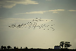 Birds fly over the national park of Las Tablas de Daimiel  in Ciudad Real on November 16, 2009. The European Union launched an investigation into Spanish wetland that has turned bone dry through mismanagement of water resources  from areas where fish once swam. The EU wants the Spanish government to explain how it plans to save Las Tablas de Daimiel National Park.The park, one of Spain's few wetlands, is classified as a UNESCO biosphere site and an EU-protected area because of its birdlife. But it has been drying up for decades, largely because of wells dug by farmers on the edges of the park to tap an aquifer that feeds the wetland's lagoons. Many of the wells are illegal. Environmentalists call this case a particularly glaring example of how a natural resource can be abused. (c)Pedro ARMESTRE