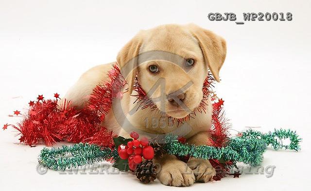 Kim, CHRISTMAS ANIMALS, photos, GBJBWP20018,#xa# stickers