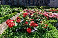 France, Maine-et-Loire (49), Angers, château d'Angers, les jardins, la roseraie