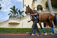 HALLANDALE BEACH, FL-JAN 25: West Coast schools in the paddock in between races as horses prepare for the Pegasus World Cup Invitational at Gulfstream Park Race Track on January 25, 2018 in Hallandale Beach, Florida. (Photo by Kaz Ishida/Eclipse Sportswire/Getty Images)