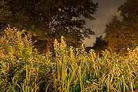 THIS IMAGE IS AVAILABLE EXCLUSIVELY FROM CORBIS<br /> <br /> Please search for image # 42- 19897317  on www.corbis.com<br /> <br /> Trees, Shrubs and Foliage in New York City's Riverside Park, Illuminated at Night<br /> <br /> Upper West Side, New York City, New York State, USA