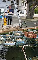 Europe/France/Bretagne/29/Finistère/Lannilis/Prat Ar Coum: Yvon Madec sur son chantier ostréïcole de l'Aber Benoit - Huitres de Prat Ar Coum [Non destiné à un usage publicitaire - Not intended for an advertising use]