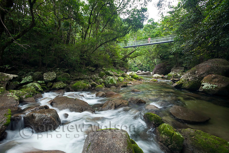 Tourists crossing the Rex Creek Suspension Bridge at Mossman Gorge.  Daintree National Park, Mossman, Queensland, Australia