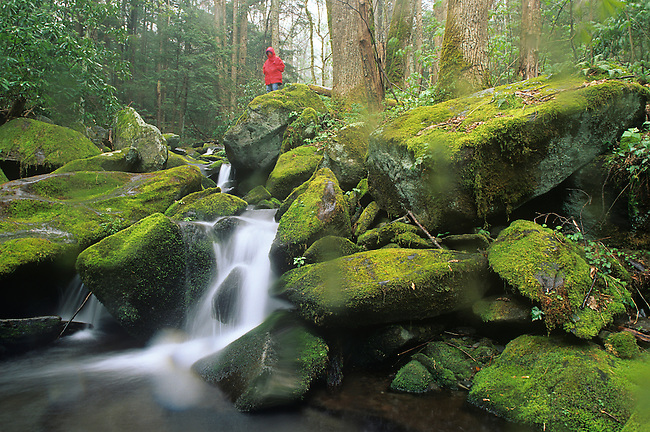 Hiker, Green Briar Creek, Smoky Mountains National Park, Tennessee
