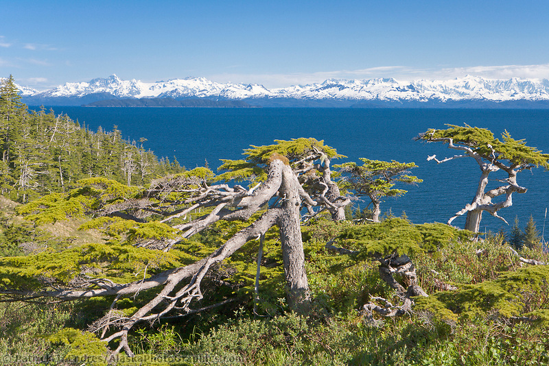 Island landscape on Ingot Island, Prince William Sound, Alaska. Chugach mountains to the north.