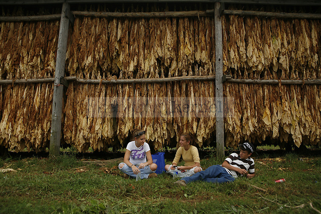 Local high school students sit in front of hanging dry tobacco at G.B. Shell Farm in Lancaster, Ky. on Sept. 3, 2009.