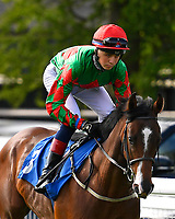 Good Times ridden by Scott McCullagh goes down to the start of The George Smith Horseboxes British EBF Maiden Stakes   during Evening Racing at Salisbury Racecourse on 25th May 2019