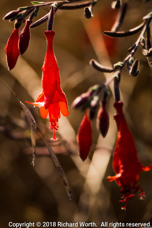 A bright orange flower hangs, like a lantern, along the path at the MLK Regional Shoreline in Oakland, California.