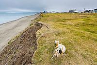 Coastal erosion along the shores of the Arctic ocean in Barrow (Utqiagvik), Alaska.
