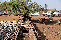 BURKINA FASO Kaya, tree on abandoned railway track / BURKINA FASO Kaya mit einem Baum zugewachsene Eisenbahnschiene