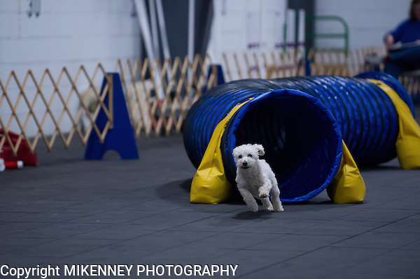 CPE Agility Trial held April 6 - 7 2013 at Boomtowne Canine Campus in Farmington NY