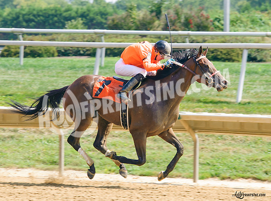 Tweet Sense winning at Delaware Park on 9/5/15