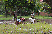 Siem Reap, Cambodia - 2007 File Photo -<br /> <br /> Workers  planting in rice fields. <br /> <br /> <br /> photo : James Wong-  Images Distribution