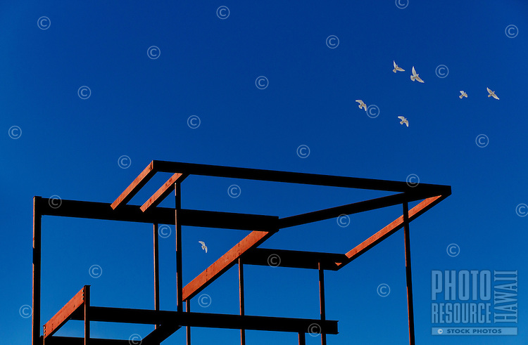White birds in a clear blue sky fly over a red house frame on O'ahu.