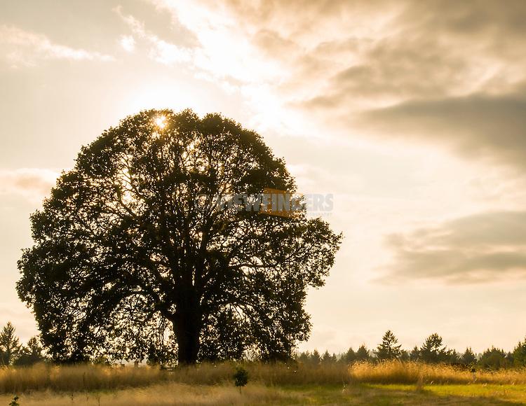 Graham Oaks Nature Park in Wilsonville, OR.