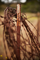 Old rusty coil of barb wire on ranchland fence, California
