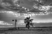 Lone windmill and cottonwood tree on the prairie