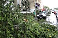 SAO PAULO, SP, 08 DE MARCO 2013 - QUEDA DE ARVORE. Arvore de medio porte caiu na Rua Serra de Bragança altura do numero 1.700 no bairro do Tatuape regiao leste da cidade de Sao Paulo. LUIZ GUARNIERI/BRAZIL PHOTO PRESS.