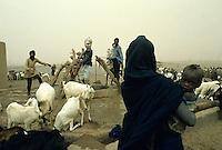 Sahara well