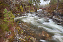 River cutting through caledonian pine forest, Braemar, Cairngorms National Park, Grampian Mountains, Scotland, UK, February.