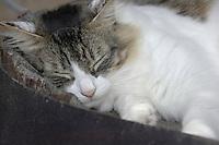 Cat sleeping, Tenerife, Canary Islands.