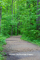 63895-14717 Trail at Ferne Clyffe State Park, Johnson Co. IL