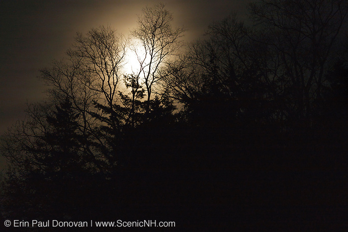 Full moon behind trees along the East Branch of the Pemigewasset River in Lincoln, New Hampshire.