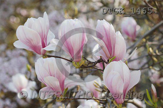Gisela, FLOWERS, photos(DTGK1465,#F#) Blumen, flores, retrato