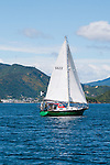 New Zealand South Island, sail boat and scenic view of Queen Charlotte Sound out of Picton. Photo copyright  Lee Foster.