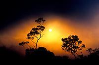 Sunset over Kalalau Valley, near Puu o Kila Overlook, Kokee State Park. Ohia lehua trees.