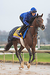 November 1, 2018: Thunder Snow (IRE), trained by Saeed bin Suroor, exercises in preparation for the Breeders' Cup Classic at Churchill Downs on November 1, 2018 in Louisville, Kentucky. Jamey Price/Eclipse Sportswire/CSM