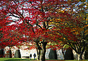 2019_10_30_Halloween_Autumn_Colour
