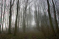 Woodland in the mist, Gloucestershire, United Kingdom.