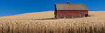 Barn in wheatfields, Palouse, Washington, USA