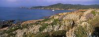 Europe/Provence-Alpes-Côte d'Azur/83/Var/Iles d'Hyères/Ile de Porquerolles: Végétation et côte rocheuse près du Fort du Grand Langoustier