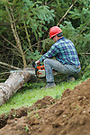 Hard hat wearing property owner cuts up fir tree with a chainsaw