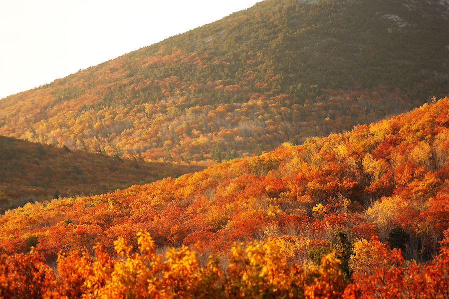 Hilly fall landscape and autumn foliage, Mount Desert Island, Acadia National Park, near Bar Harbor, Maine, USA