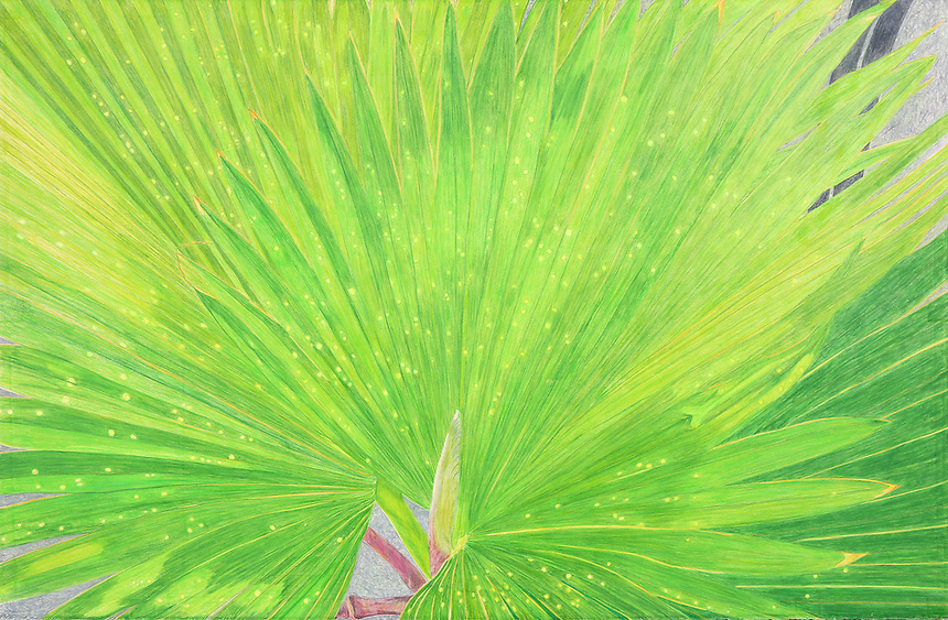 Palm Fronds. Recife. Pernambuco, BR.) Continental Drift. <br />