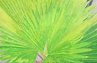 """Palm Fronds. Recife. Pernambuco, BR.) Continental Drift. <br /> Color Pencil on paper. 26"""" x 40"""". <br /> Judy Byron. 2013<br /> Photo credit: Rick Reinhard"""