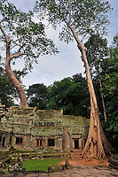 Strangler fig (Ficus sp.) tree roots on Archeologists at Preah KhanTemple, Angkor Wat, Cambodia