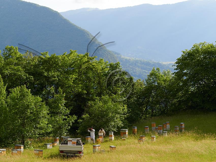 The small Warré hives are today used by professional beekeepers for the production of swarms and queen bees.<br /> Les ruches warr&eacute; de plus petites tailles sont aujourd&rsquo;hui utilis&eacute;es par des apiculteurs professionnels pour la production d&rsquo;essaim et de reines.