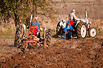 Antique tractors plowing a field in fall during the Branch 158 EDGE & TA Fall Plow Day and Plowing Seminar near Pleasant Grove, Calif...Silmer Scheidel Farm..Case VAO and Ford 8N tractors