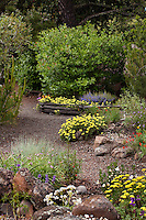 Gravel path through Kyte backyard, layered habitat California native plant mixed garden with shrubs, trees, perennials and grasses, and bird feeder
