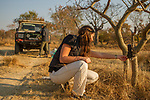 Cheetah (Acinonyx jubatus) biologist, Xia Stevens, placing camera trap on tree, with biologist, Kim Young-Overton checking camera trap images, Kafue National Park, Zambia
