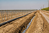 Irrigation ditch running next to vineyard and almond orchard. Rod Cardella runs Cardella Winery, a family business since 1969, which grows almonds, broccoli and other crops as well as grapes. With the high price of water in recent years, Rod has turned to technology and drip irrigation to lower water usage and like many other farmers is planting high value crops such as almonds. Fresno County, San Joaquin Valley, California, USA