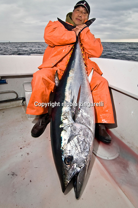 Sometimes the Tunas can be longer than the fisherman, and they are so heavy that is nearly impossible to hold them properly.
