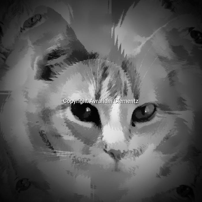 Stock photos of cats