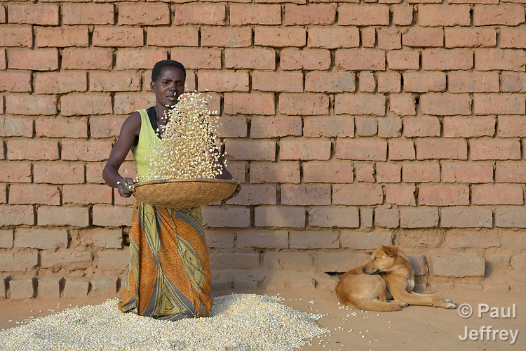 Anastansia Chavula winnows corn at her home in Edundu, Malawi. She and others in the village have benefited from intercropping, crop rotation, and composting practices they learned from the Malawi Farmer-to-Farmer Agro-Ecology project of the Ekwendeni Mission Hospital AIDS Program, a program of the Livingstonia Synod of the Church of Central Africa Presbyterian.