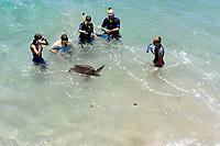 Observers, Hawaii turtle, Chelonia mydas, Hapuna beach resort, Hapuna beach, south Kohala coast, The Big Island of Hawaii